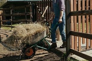 Rolnik prowadzi taczkę